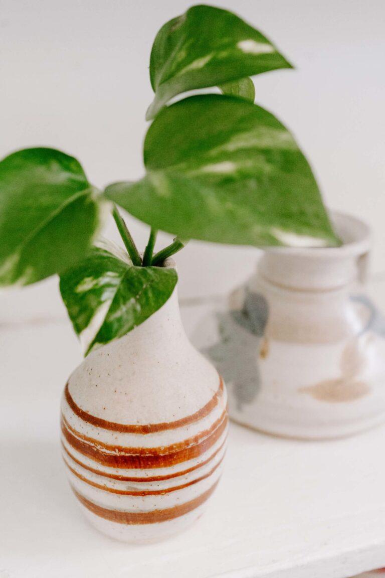 Why I love to use houseplants around my home